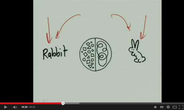 the rabbit or the rabbit