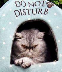 Anna Kochetkova: do not disturb