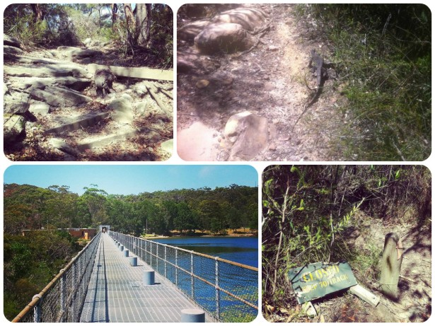 manly dam collage