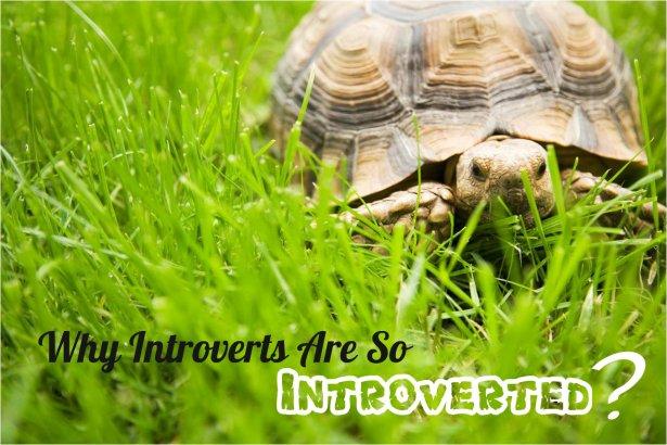 Anna kochetkova: Why Introverts Are So Introverted?